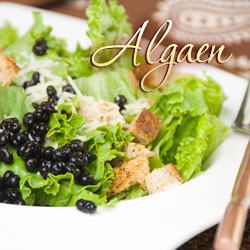 Algaen with Salad
